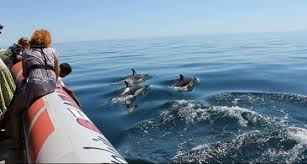 Dolphin safaris